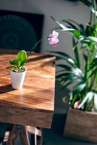 cabinet orchidée
